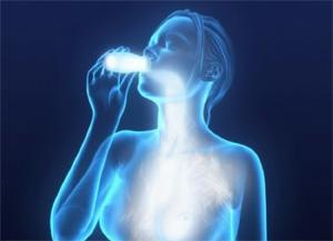 Resultado de imagen de probioticos