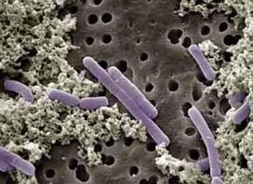 probiotico-NTnva