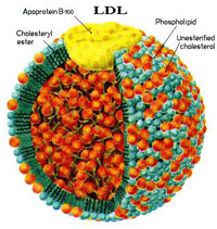 colesterol-ldl