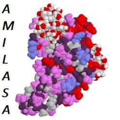 amilasa
