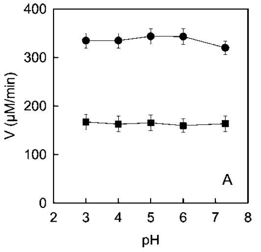 Actividad de PPO ecológica (círculos) y tradicional (cuadrados) a diferentes pHs en presencia de tripsina.