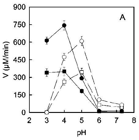 Actividad PPO en uva ecológica (círculos) y tradicional (cuandrados) en diferentes condiciones