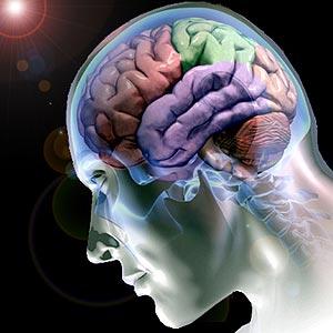 nuestro-cerebrocerebro-humano