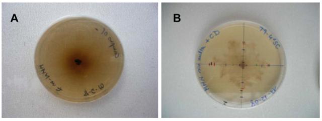 Medio de cultivo de Terfezia Clavery  en ausencia (A) y en presencia (B) de ciclodextrinas.