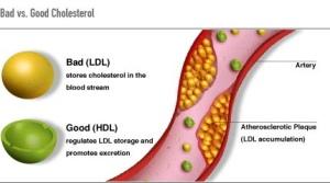 colesterol4-2