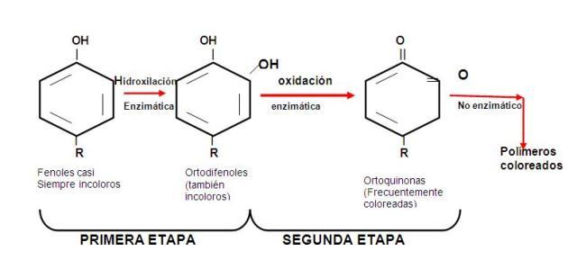 Reacción de pardeamiento enzimático