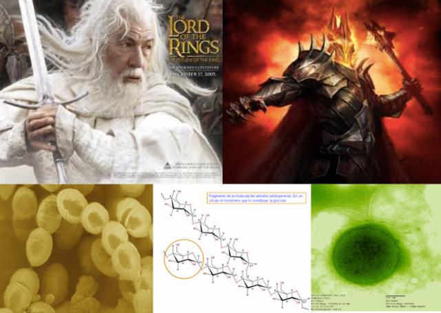 Arriba: Gandalf y Sauron. Abajo: Lactococcus, Amilosa y Thermococcus