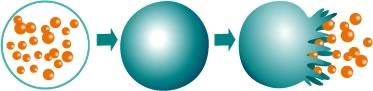 Microcápsula liberando ingredientes bioactivos