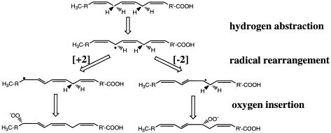 Reacción catalizada por lipoxigenasa
