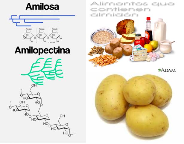 Estructura de la amilosa y la amilopectina que forman el almidón. Alimentos ricos en almidón (Fuentes: trecetas.com & Medline Plus)