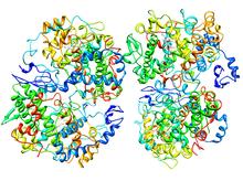 Ciclooxigenasa (isoenxima 2)