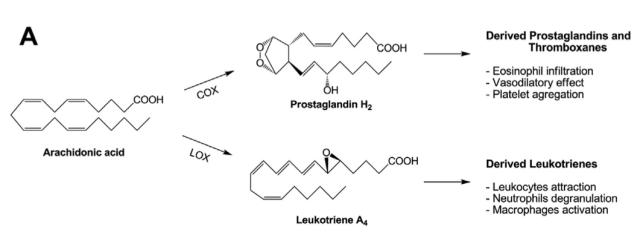 Esquema de la transformación del ácido araquidónico en moléculas relacionadas con procesos inflamatorios por la acción de COX y LOX