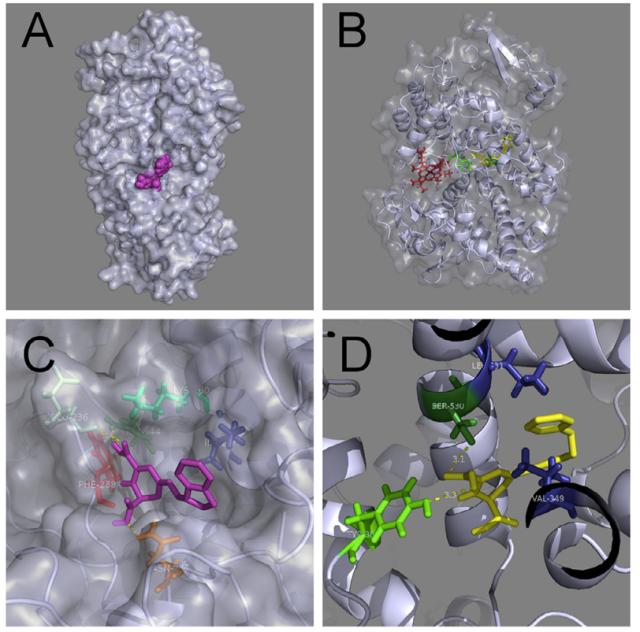 Análisis por docking molecular de la interacción entre betalaínas y COX y 5-LOX. (más información en referencias)
