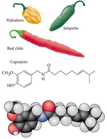 capsaicina1