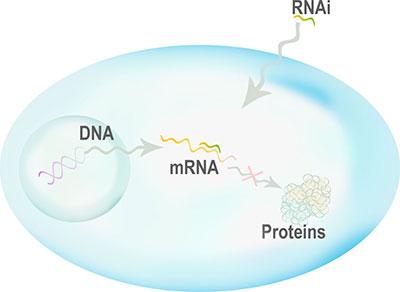 Mecanismo de silenciamiento génico basado en ARNi
