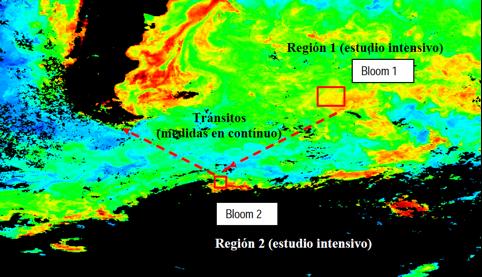 Imagen 4. Imagen de la NASA de la concentración de clorofila en el océano: en rojo más y en azul menos concentración (Fuente: http://www.icm.csic.es/icmdivulga/ca/campana-pegaso-01.htm).