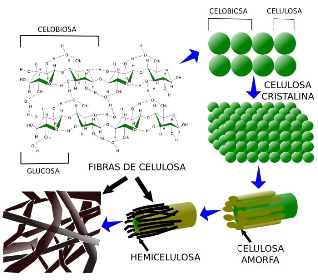 matriz-celulosa