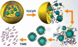 Proceso de encapsulación molecular y liberación controlada.