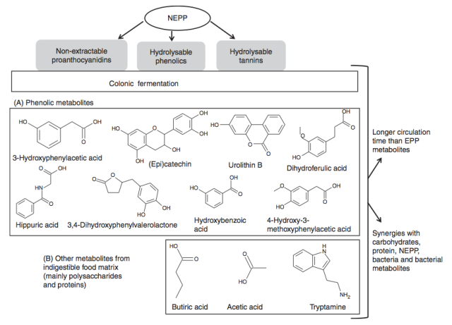 Principales características de polifenoles no extraibles (NEPP). Nutr. Res. Reviews (2013), 26, 118–129.