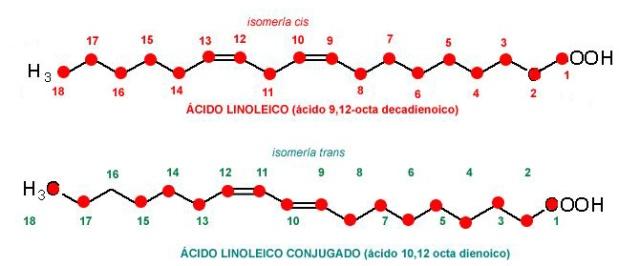 a_linoleicos